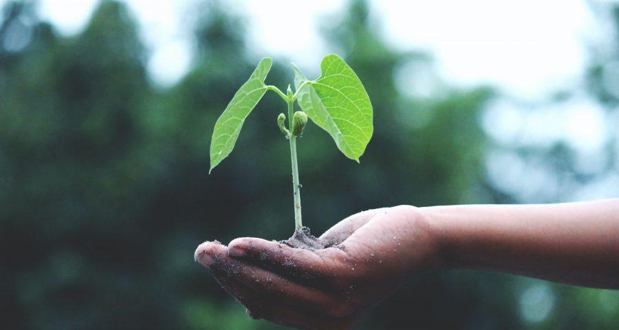 Pflanze als Symbol für Nachhaltigkeit